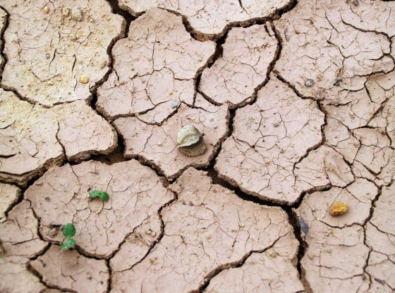 Drought (Photo by icon0.com from Pexels)